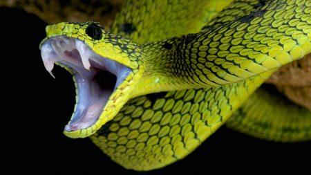 Nằm mơ thấy rắn lục tốt hay xấu