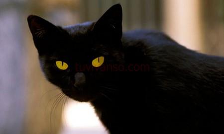Mèo là vật nuôi được con người yêu thích. Vậy nằm ngủ mơ thấy mèo là tốt hay xấu? Liệu đằng sau giấc mơ đó có điềm báo gì?
