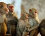 Nằm mơ thấy khỉ có điềm báo gì, giải mã giấc mơ thấy khỉ